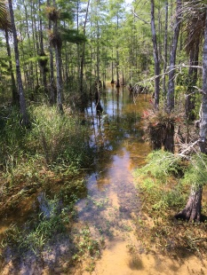 Beginning of swamp - water is our path