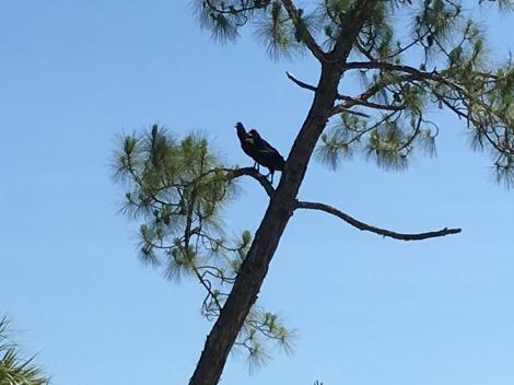 Random bird - I'd have to call Susan